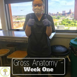 Gross Anatomy Week One