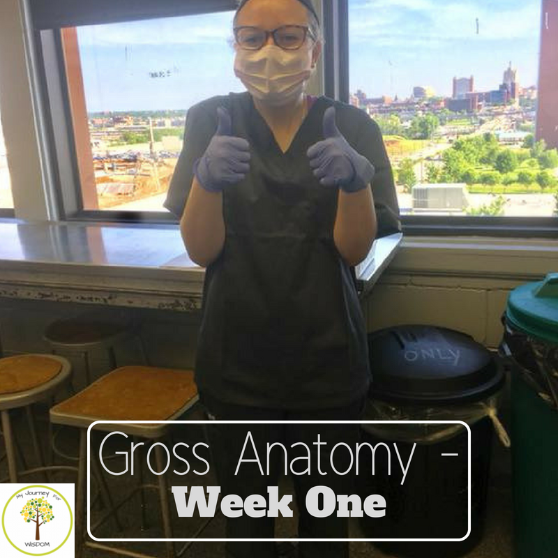 Gross Anatomy- Week One